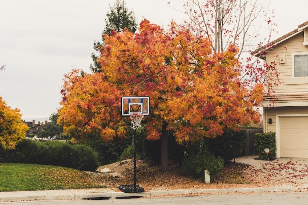 black and white basketball hoop near tree