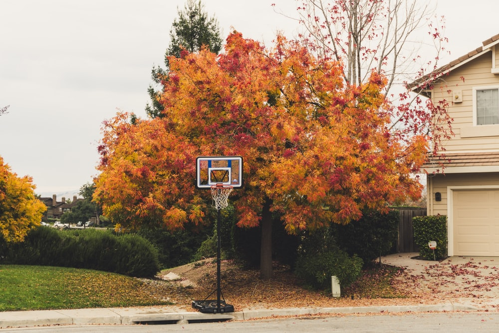 black and white basketball hoop near tree
