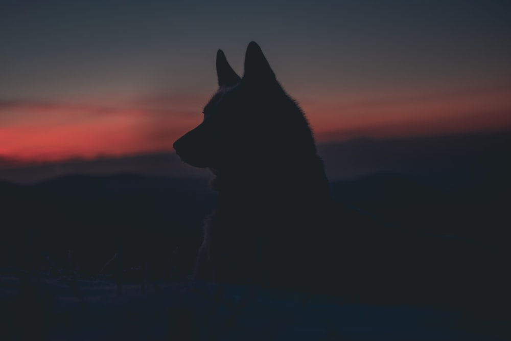 silhouette of dog