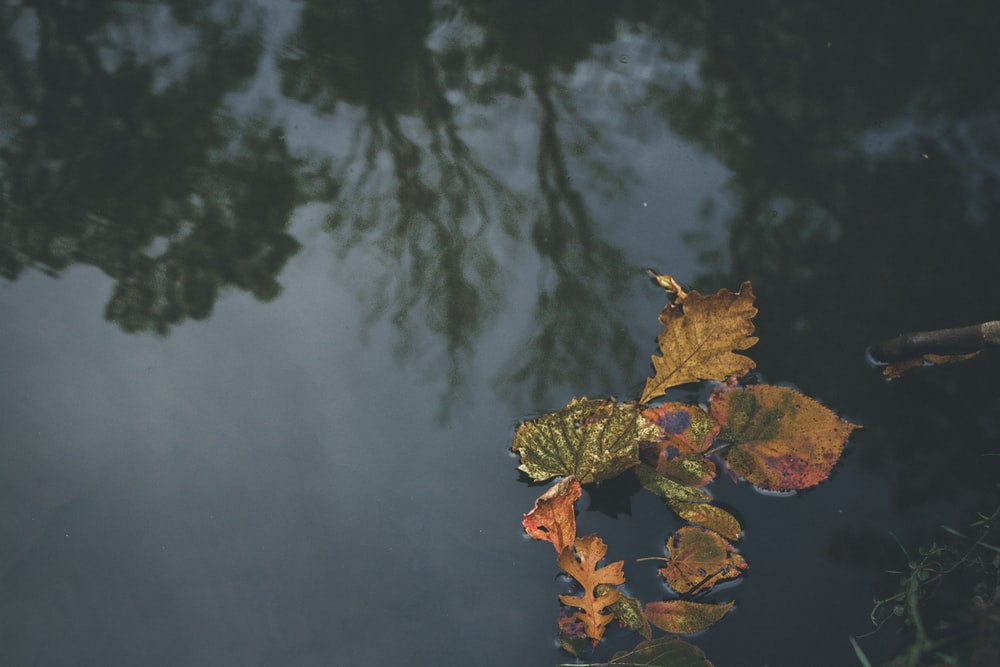 several dried leaves floating on body of water