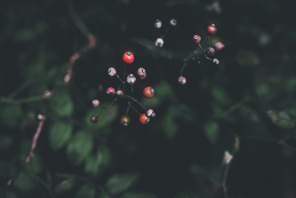 round red fruites
