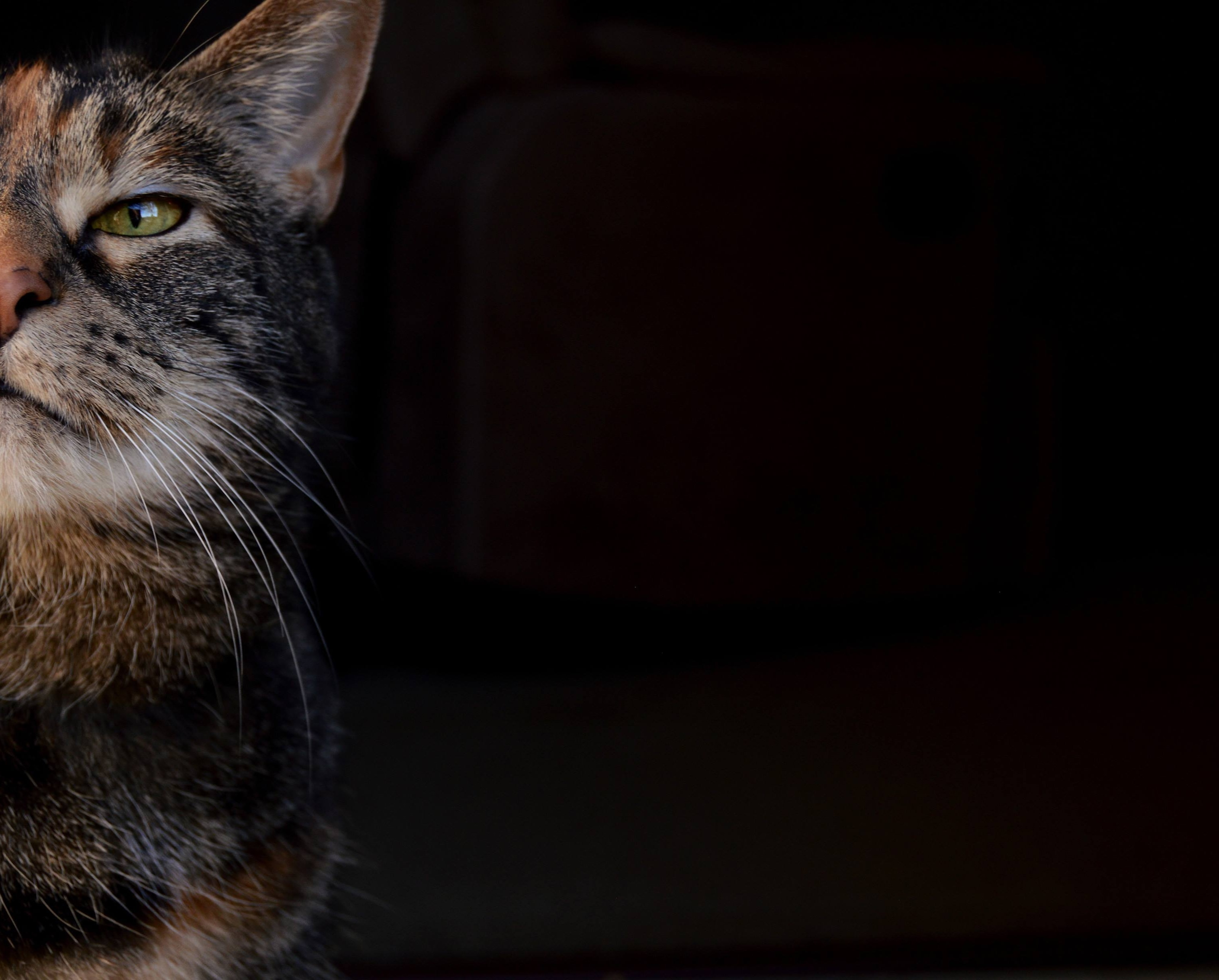 photography of brown and black cat