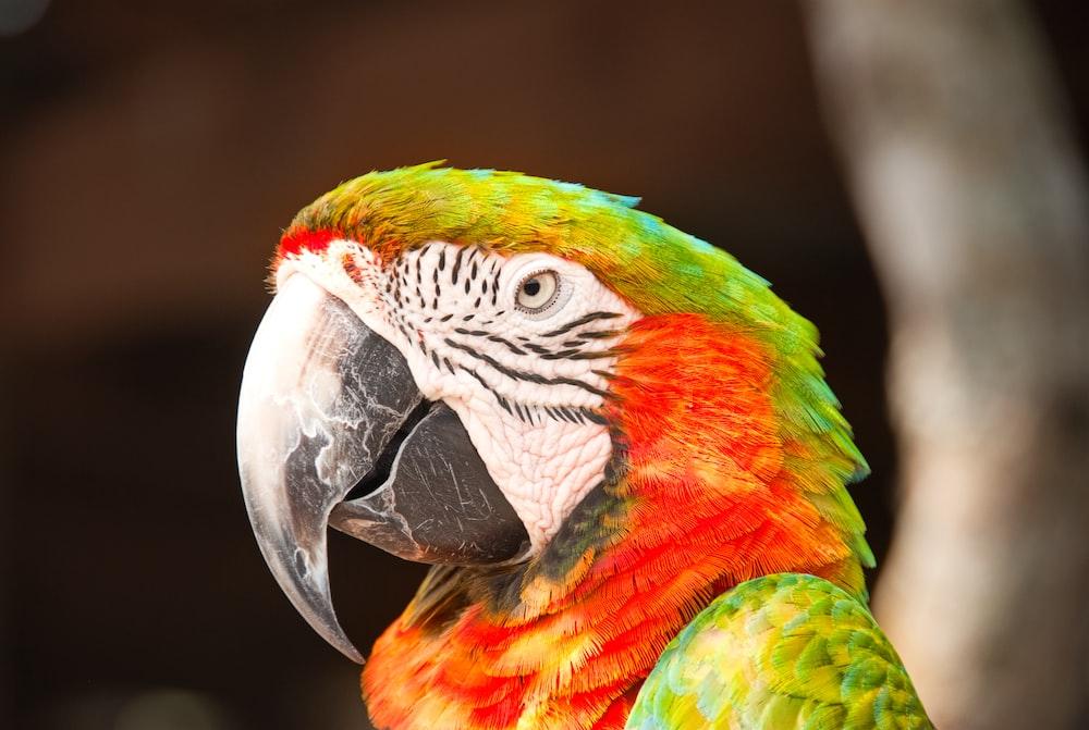 macro shot of red and green bird