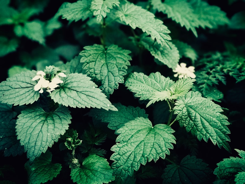 green leafed plant and white flowers