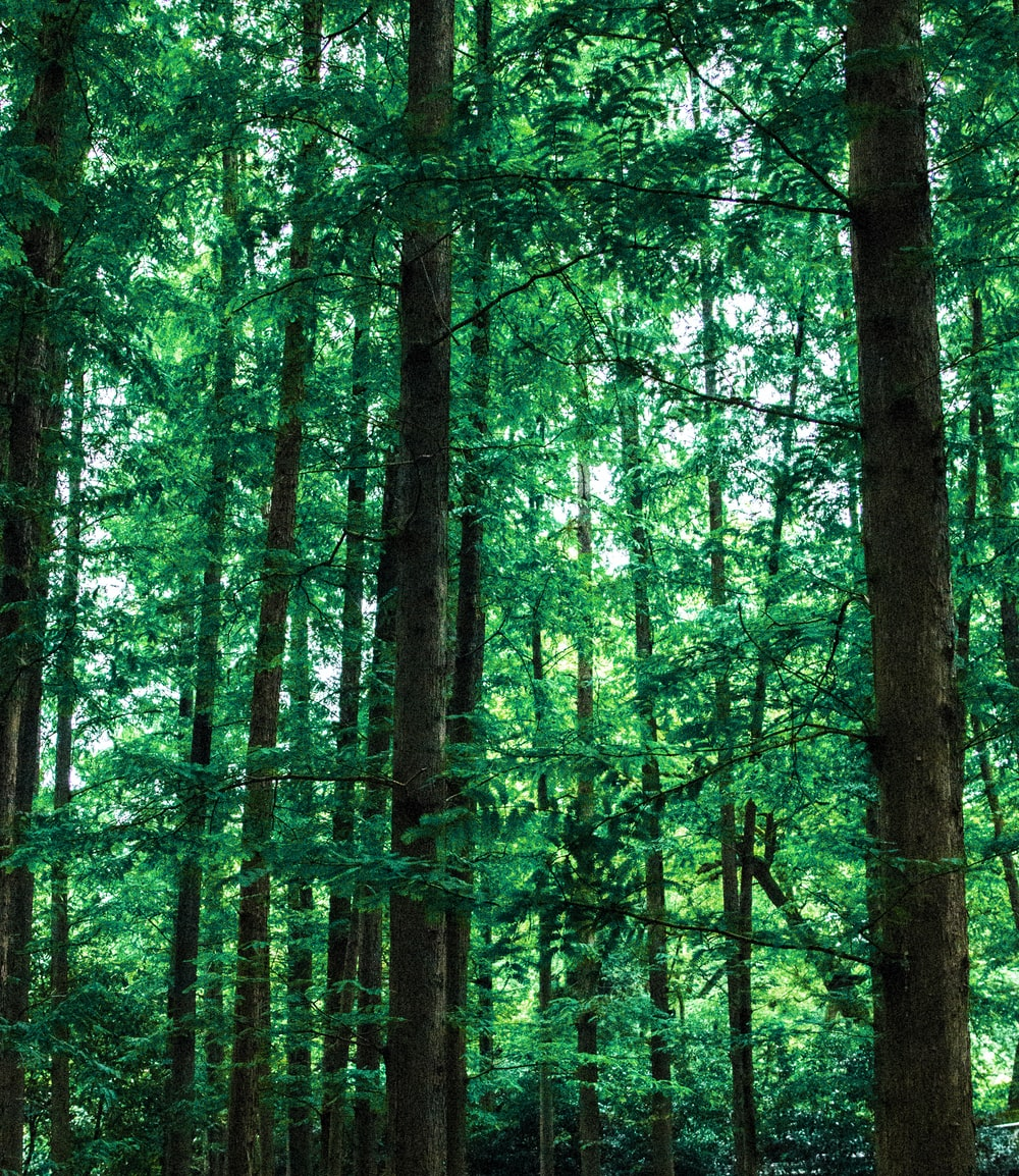 photo of green leafed trees