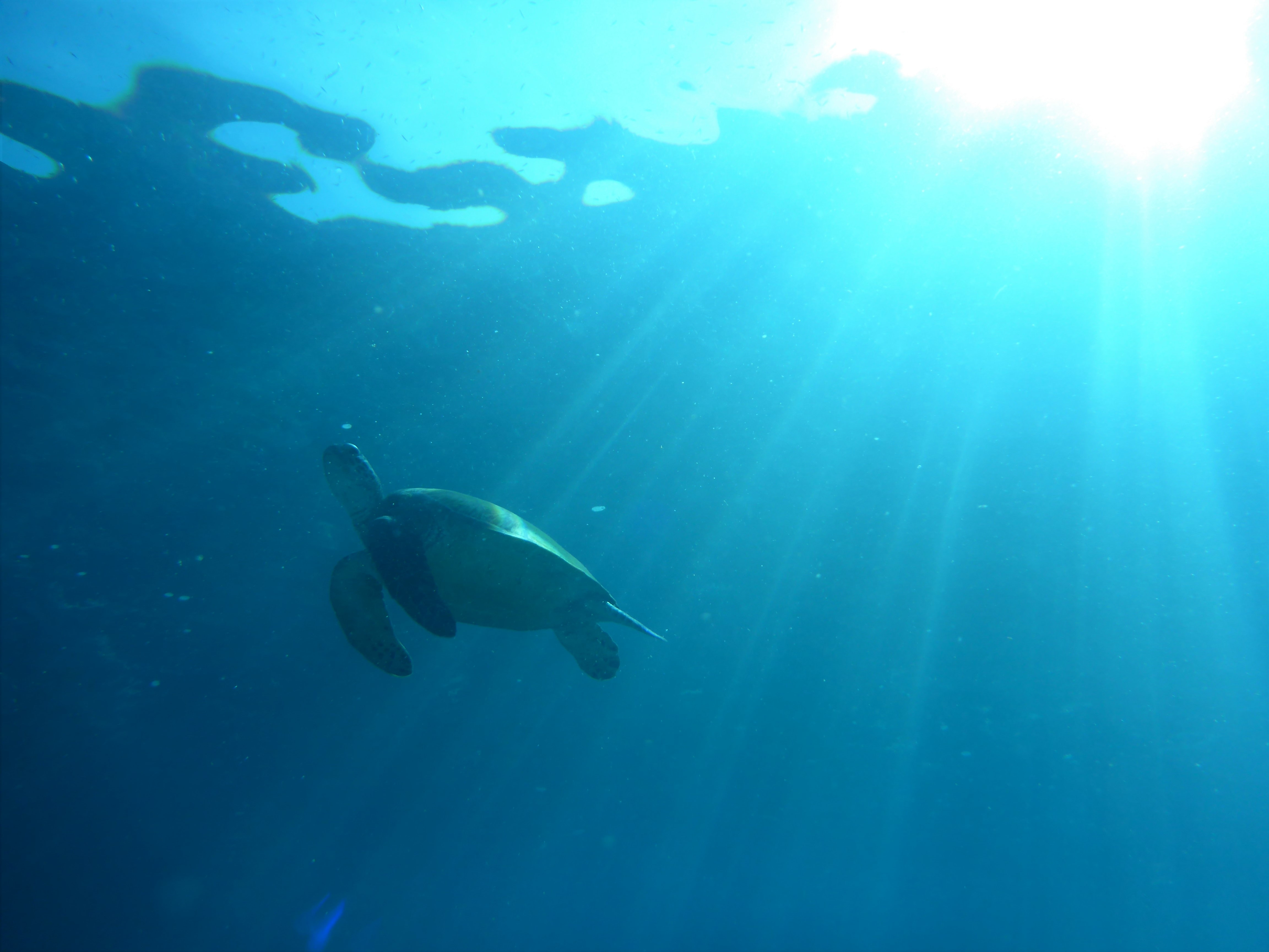 underwater view photography of brown turtle