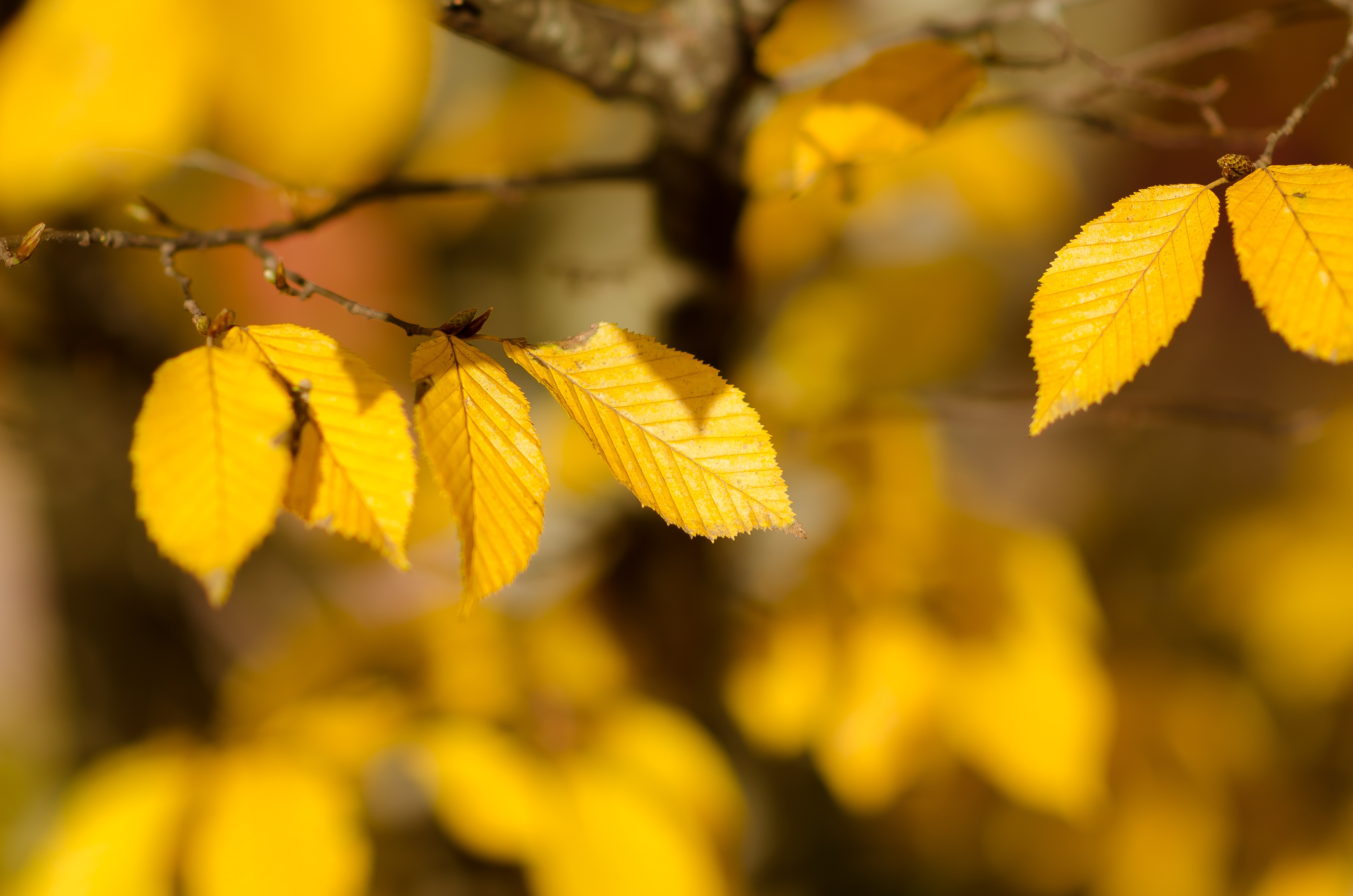 closeup photography of brown leaves