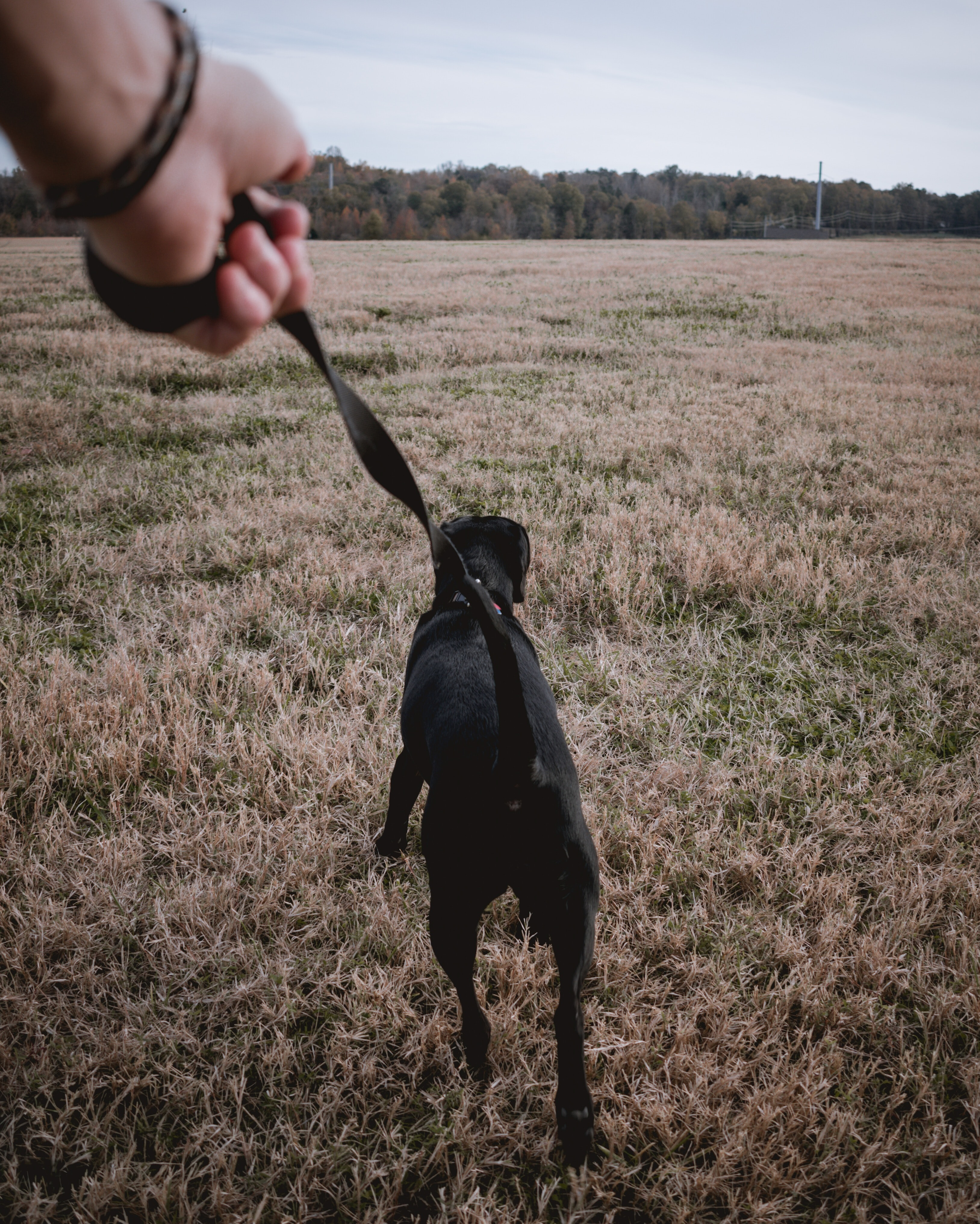 person holding black dog strap