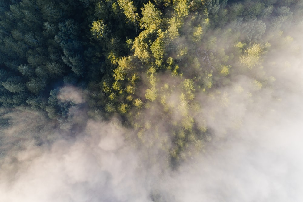 birds eye view of tall green leafed trees