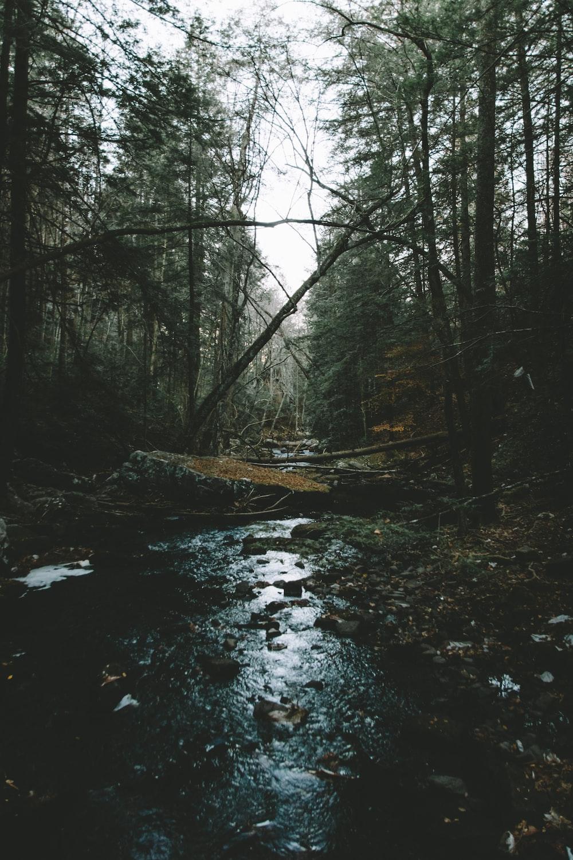 stream between tall tress