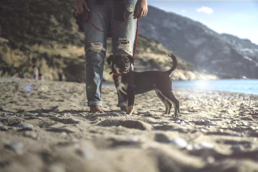 black and tan dog on seashore