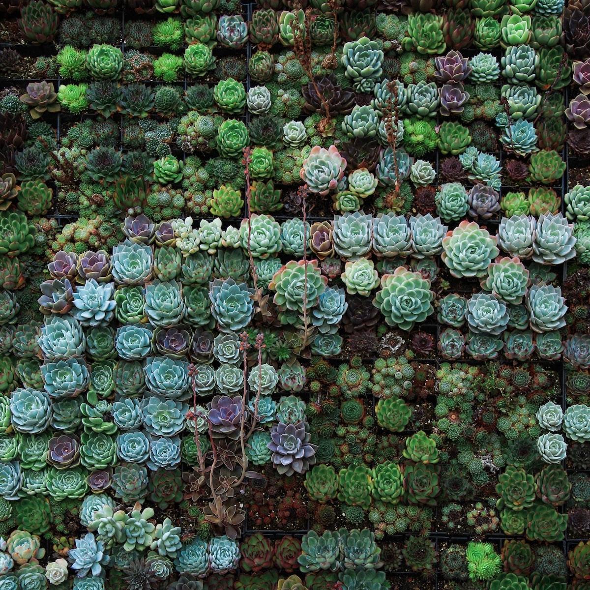 Succulent Frenzy