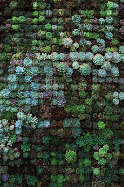 Succulent Frenzy