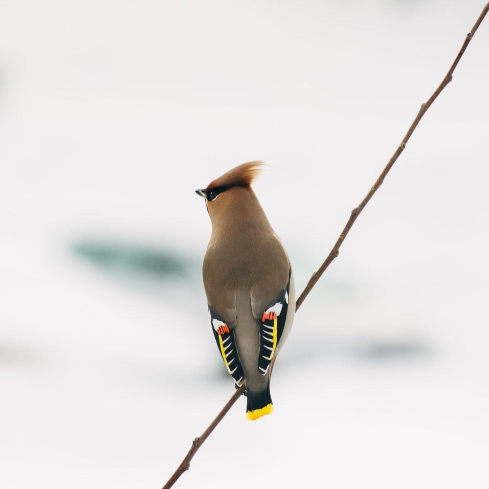 gray and multicolored bird perched on twig