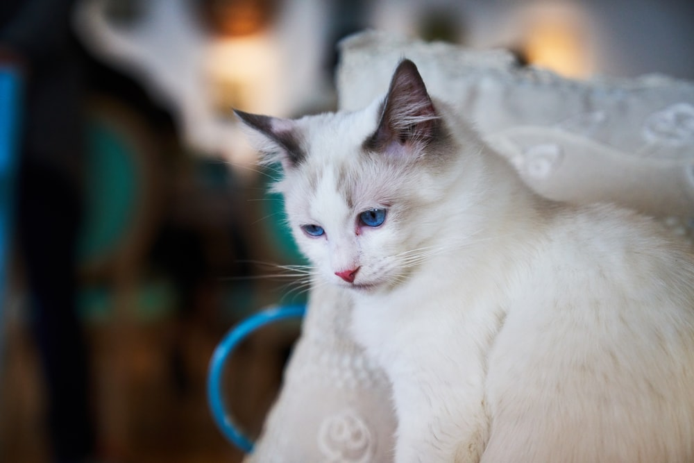 selective focus photography of cat leaning on white pillow