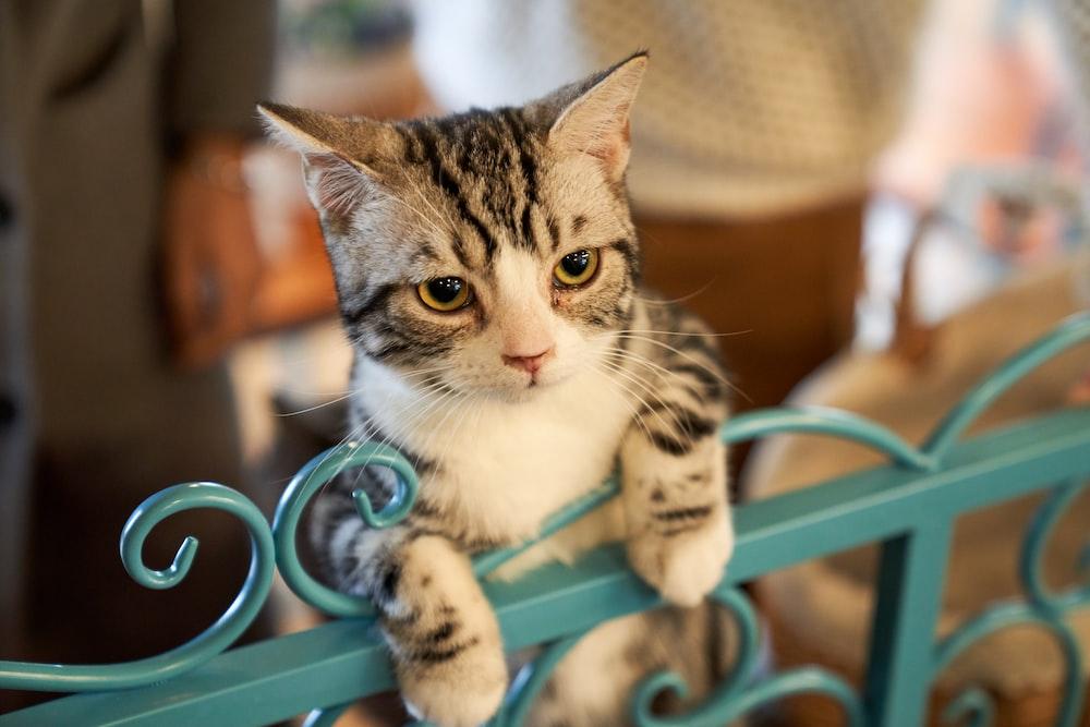 brown tabby cat on teal metal gate