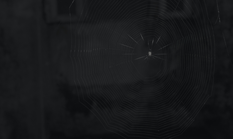 photo of spider on spider web