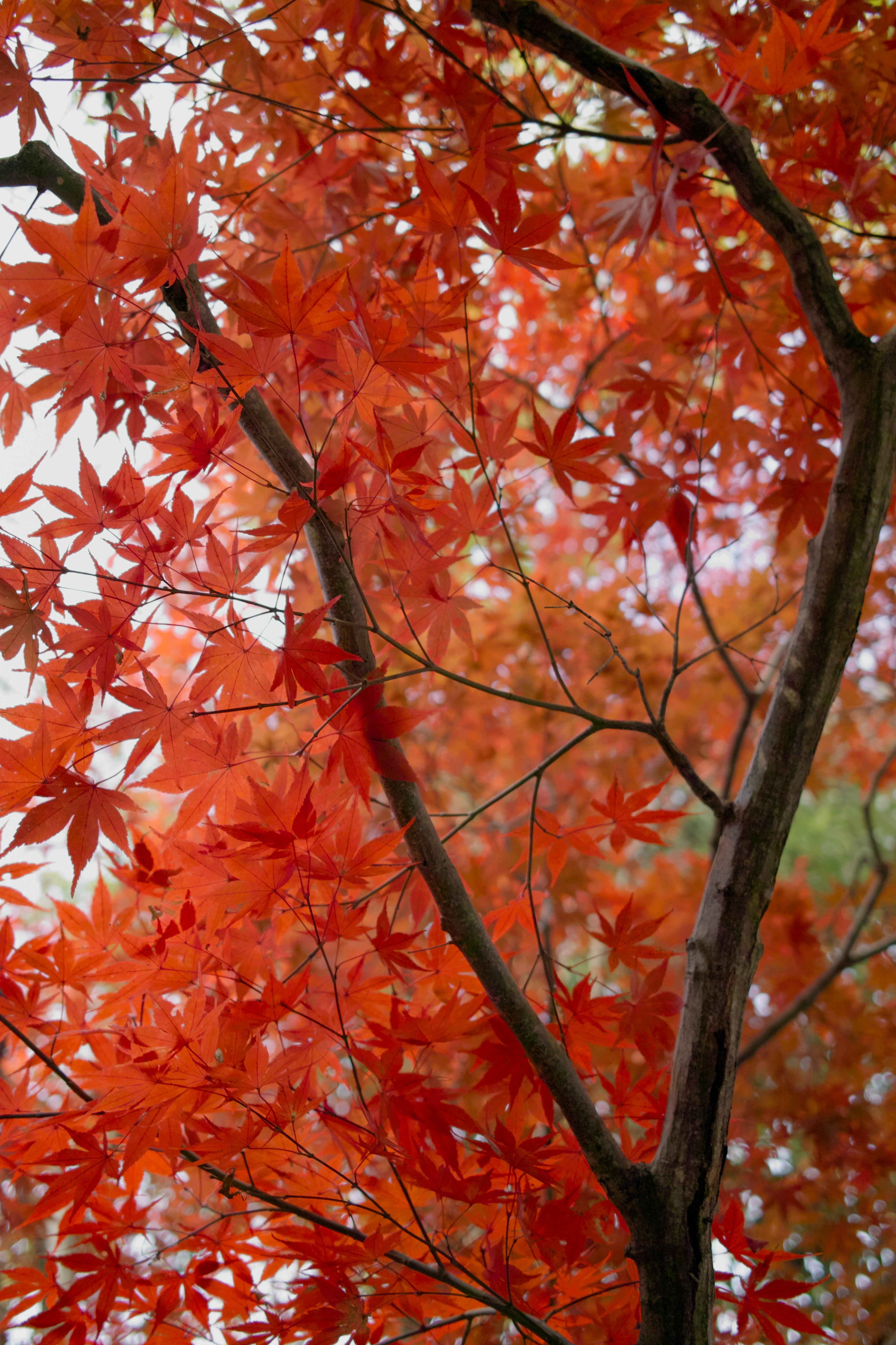 red leafed tree during daytime