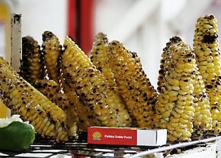 grilled corn on rack