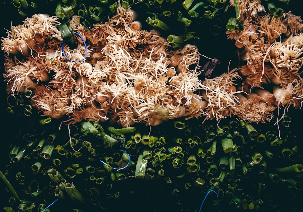 green ring onions close-up photography