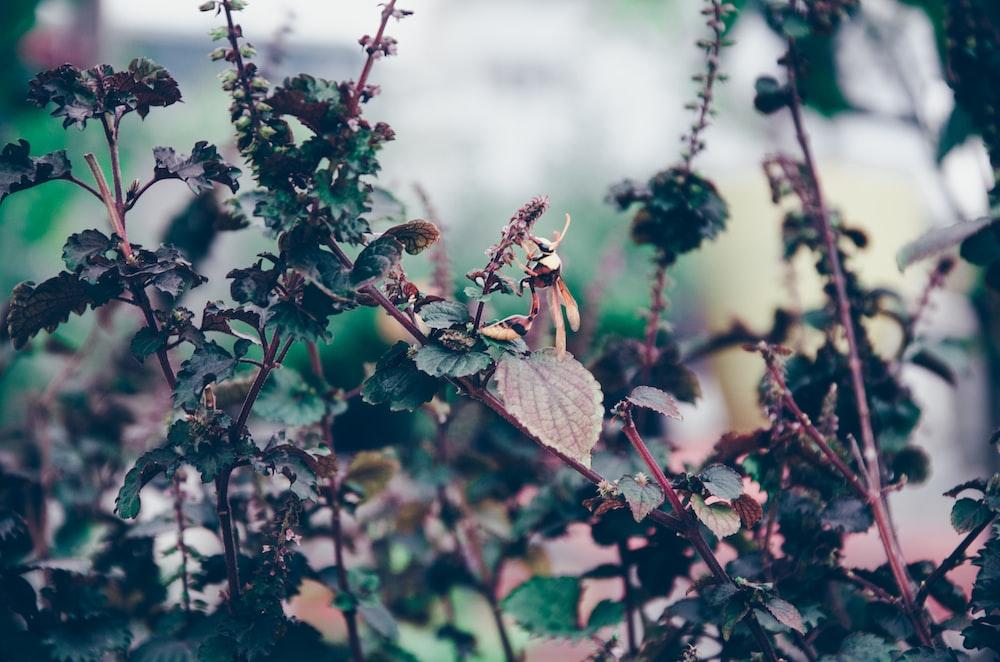 black hornet on green leafed plant