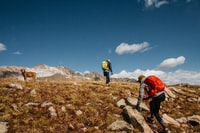 two people and brown dog hiking on mountain under blue sky during daytime