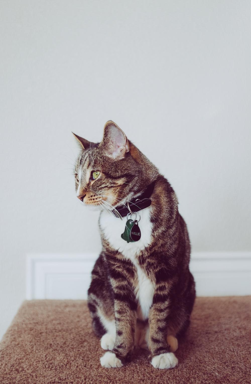 black cat sitting on grey rug