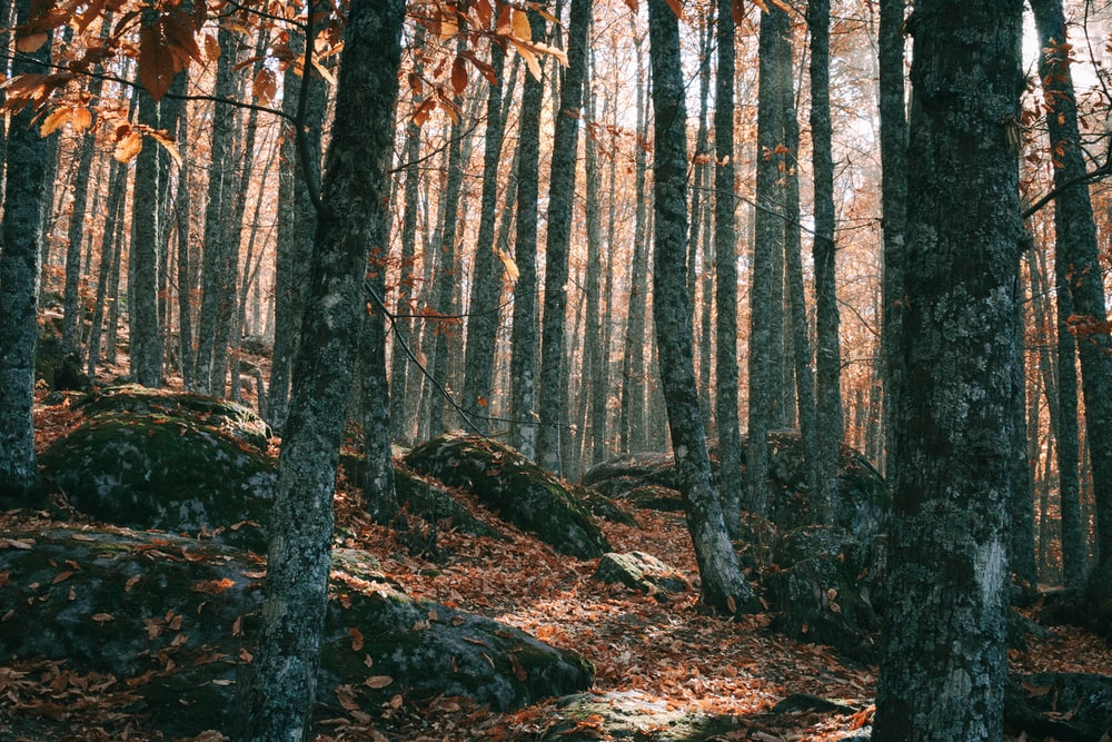 photo of forest during daytime
