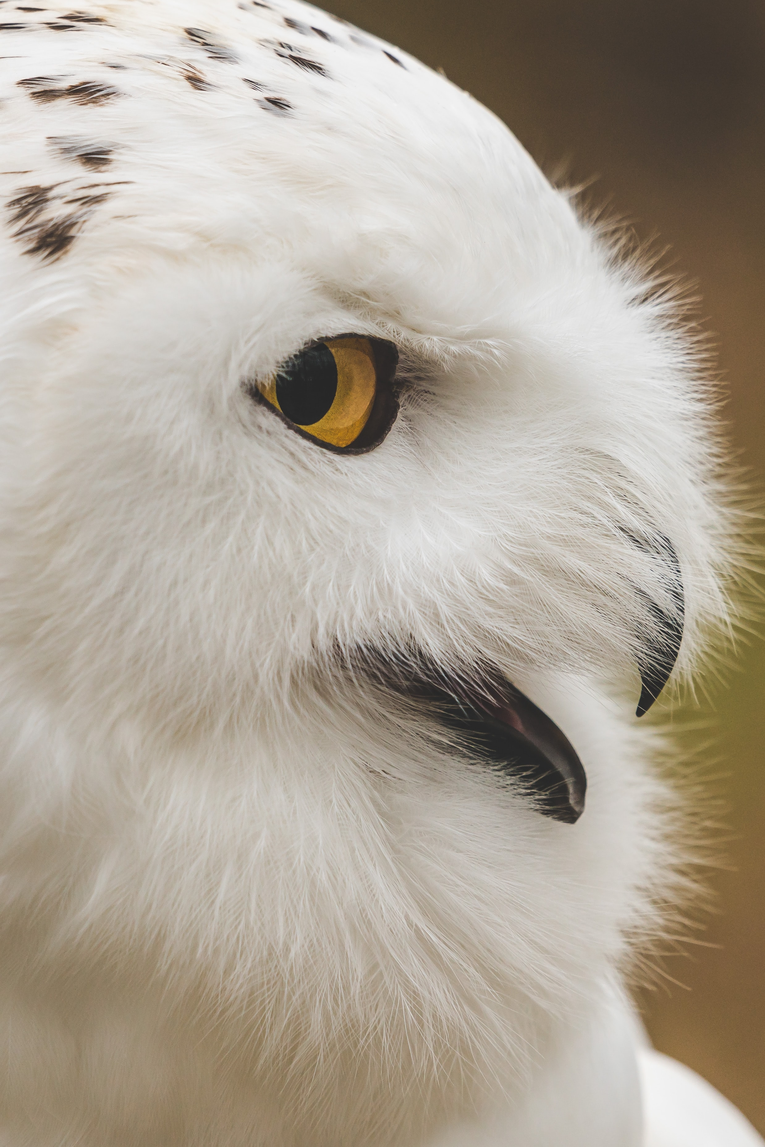 white owl in shallow focus photography
