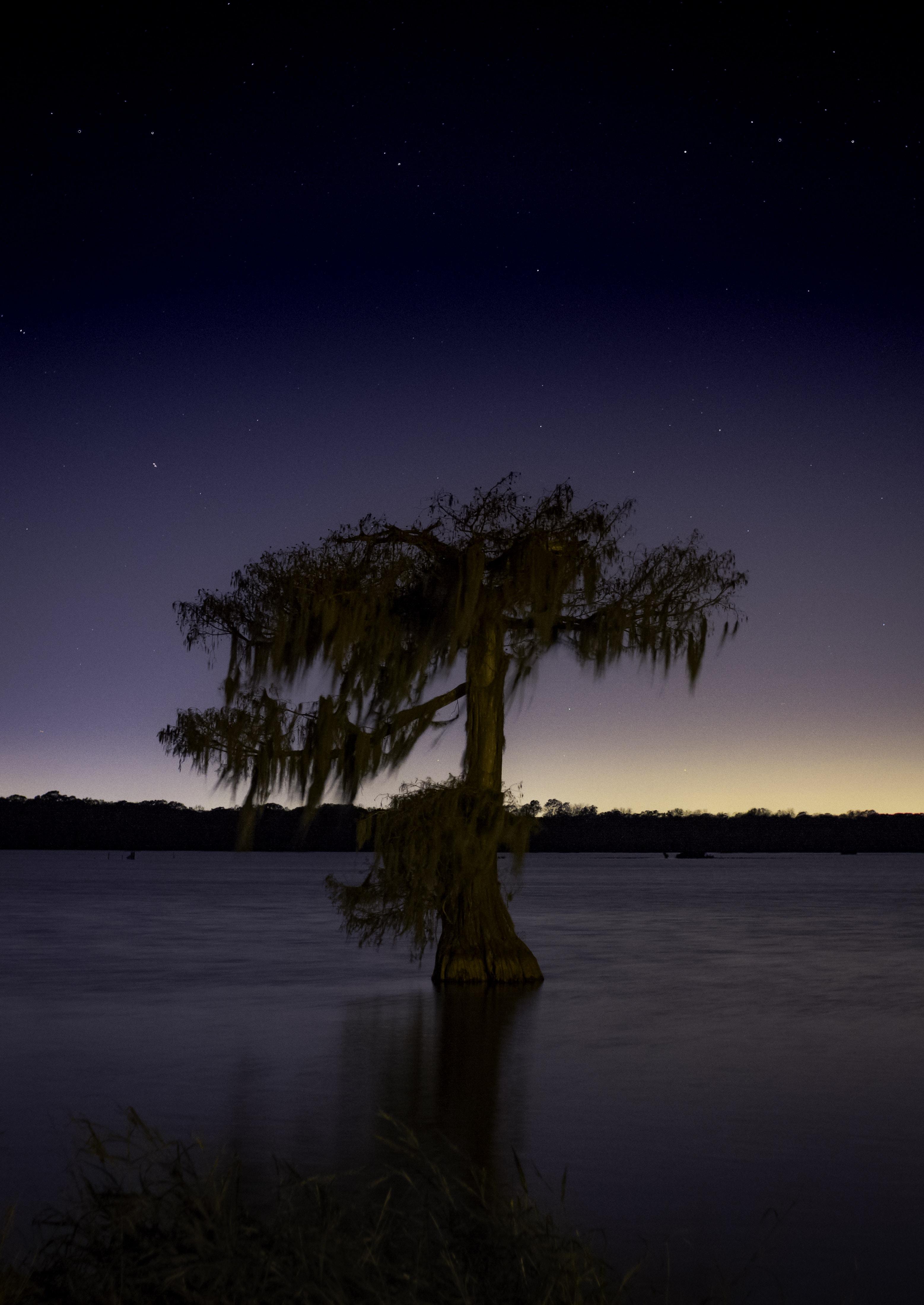 brown tree surrounded ocean water under night sky