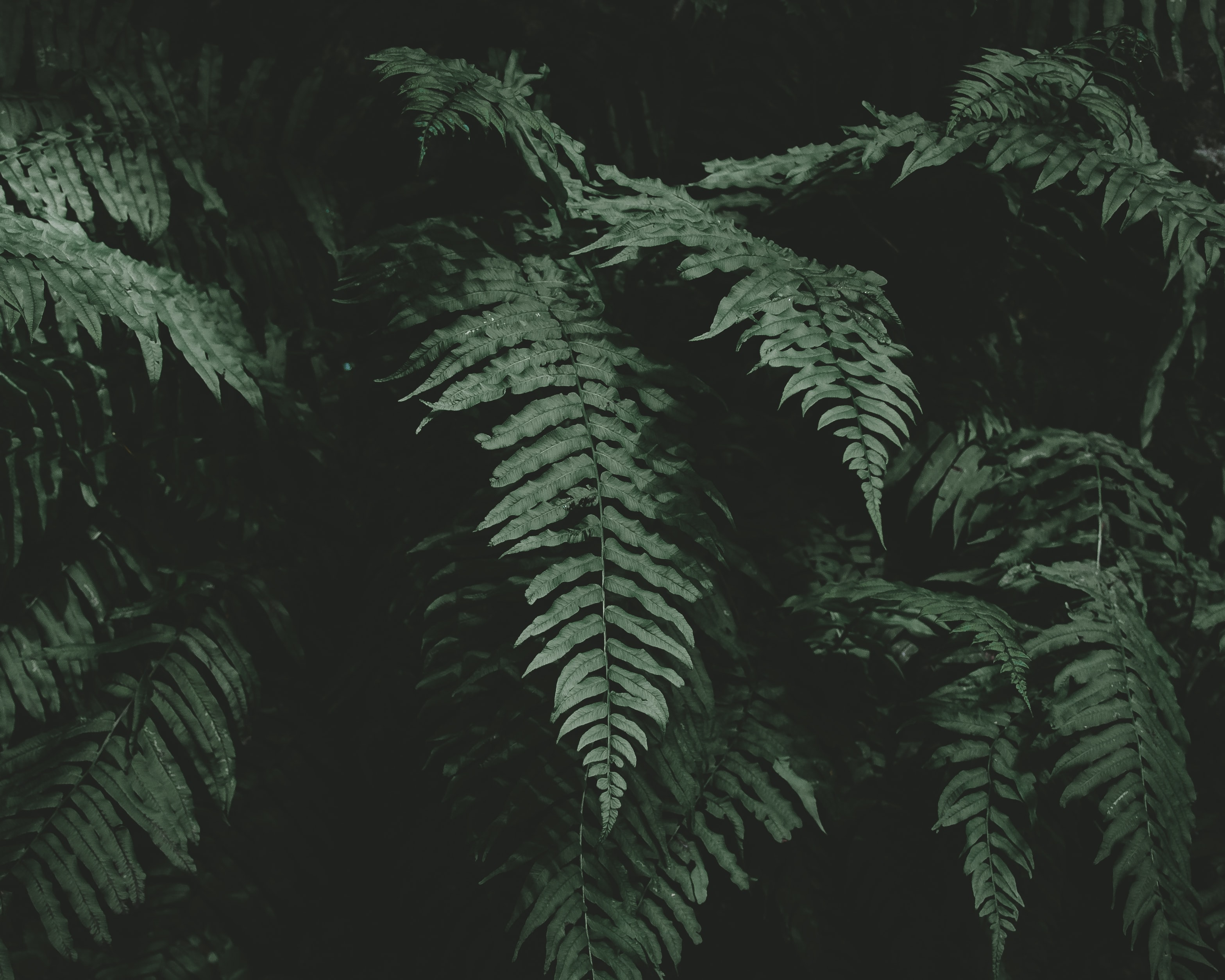 photo of fern plant