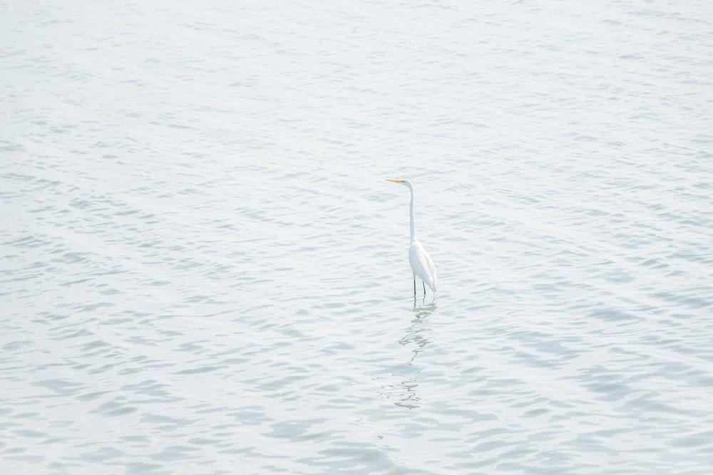 white bird on seashore