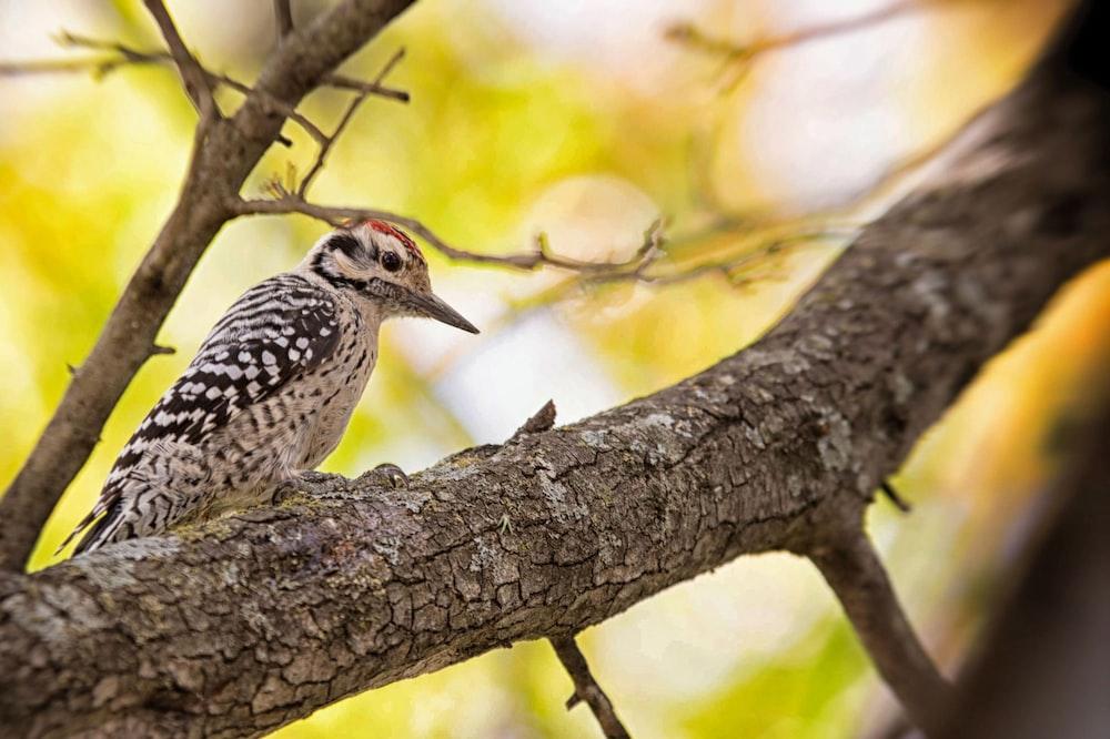 shallow focus photography of humming bird