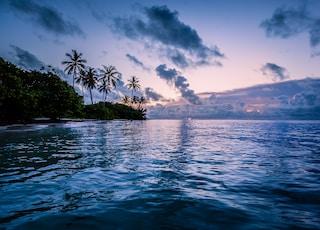 body of water near coconut trees