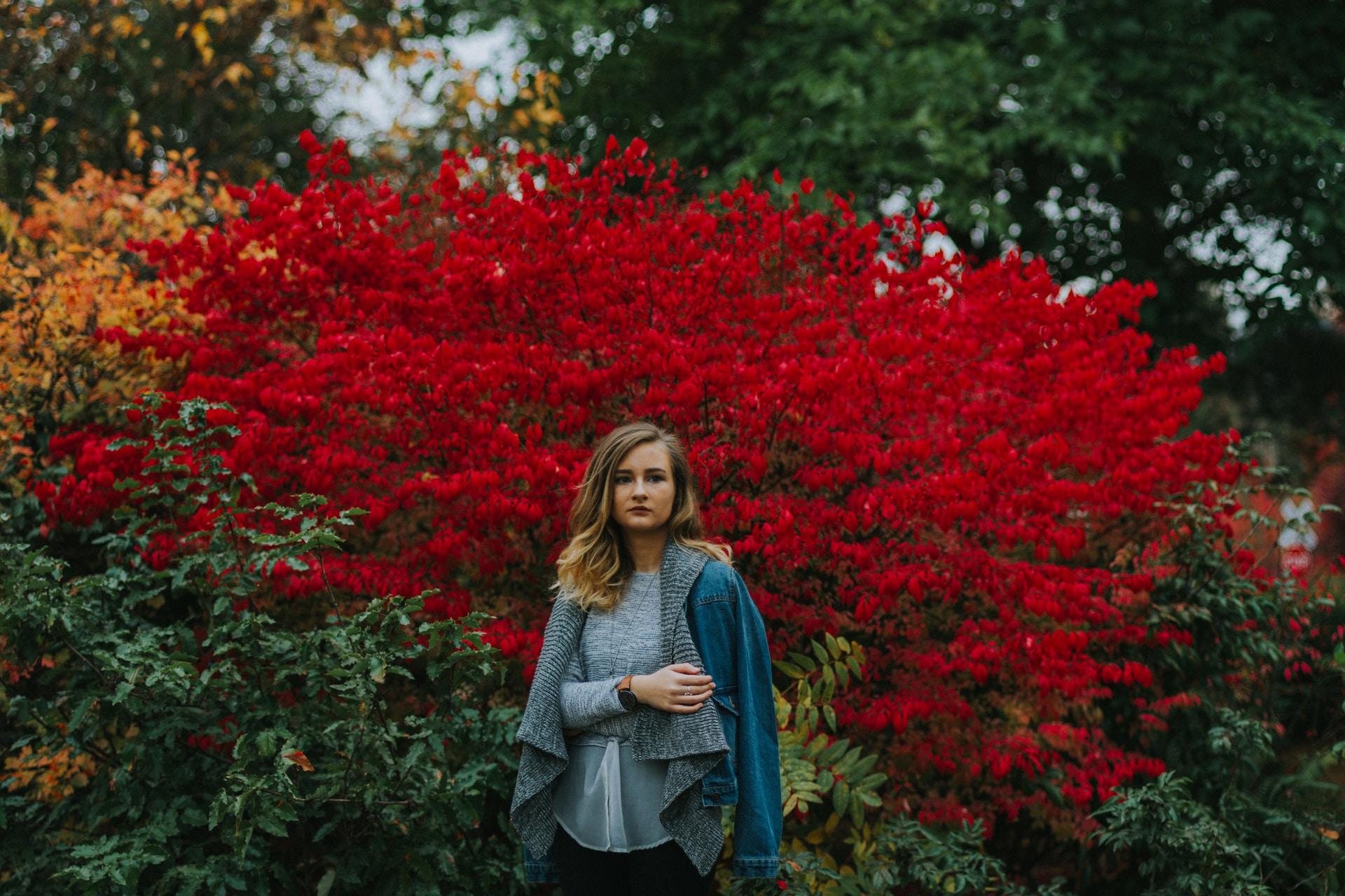 woman in blue cardigan standing near red petaled flowers