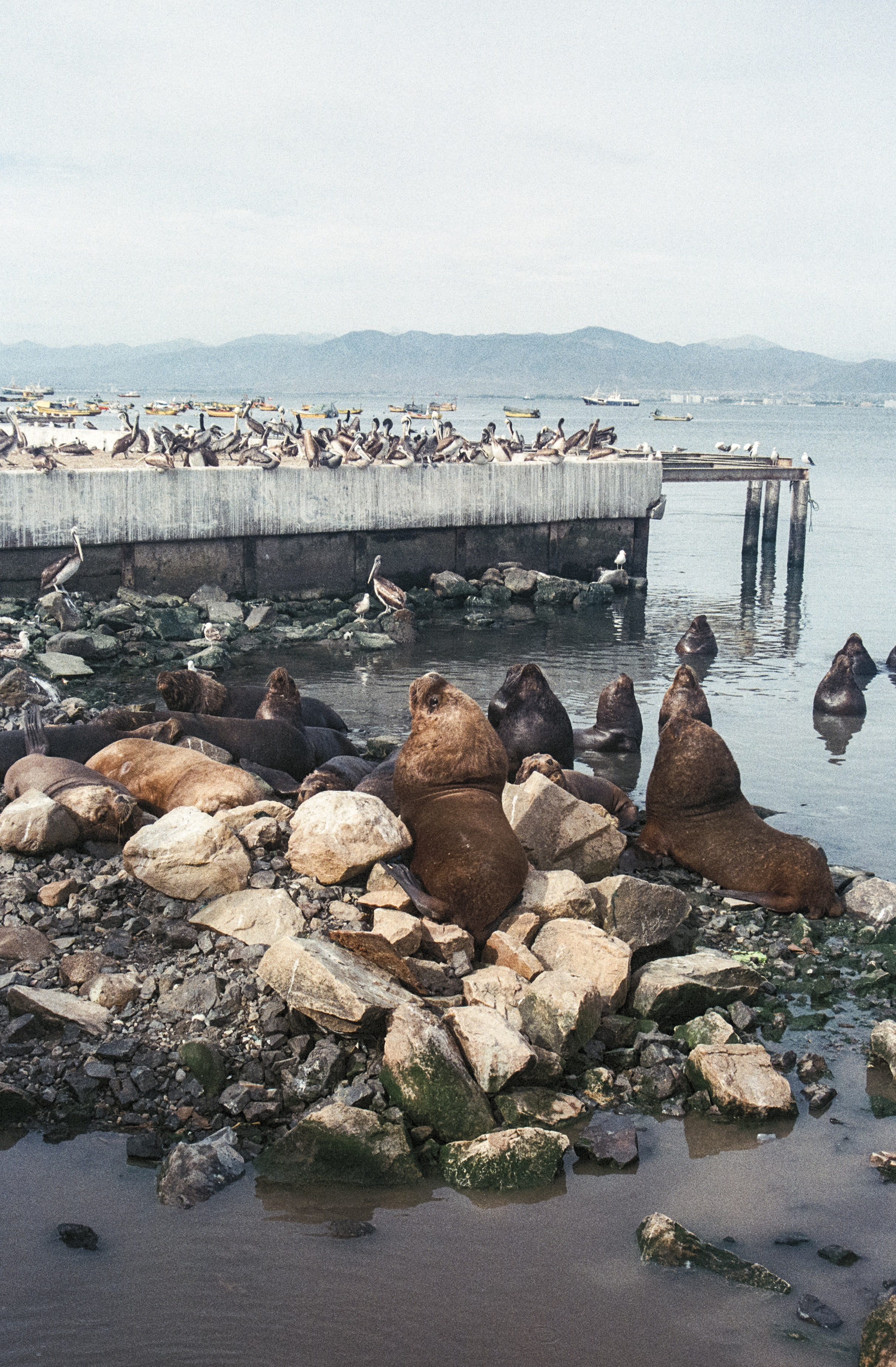 brown and white seals on body of water at daytime