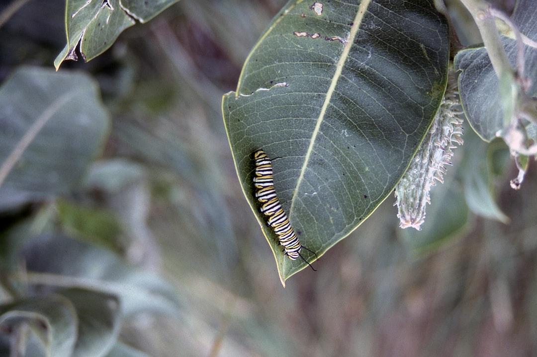 Badlands Caterpillar