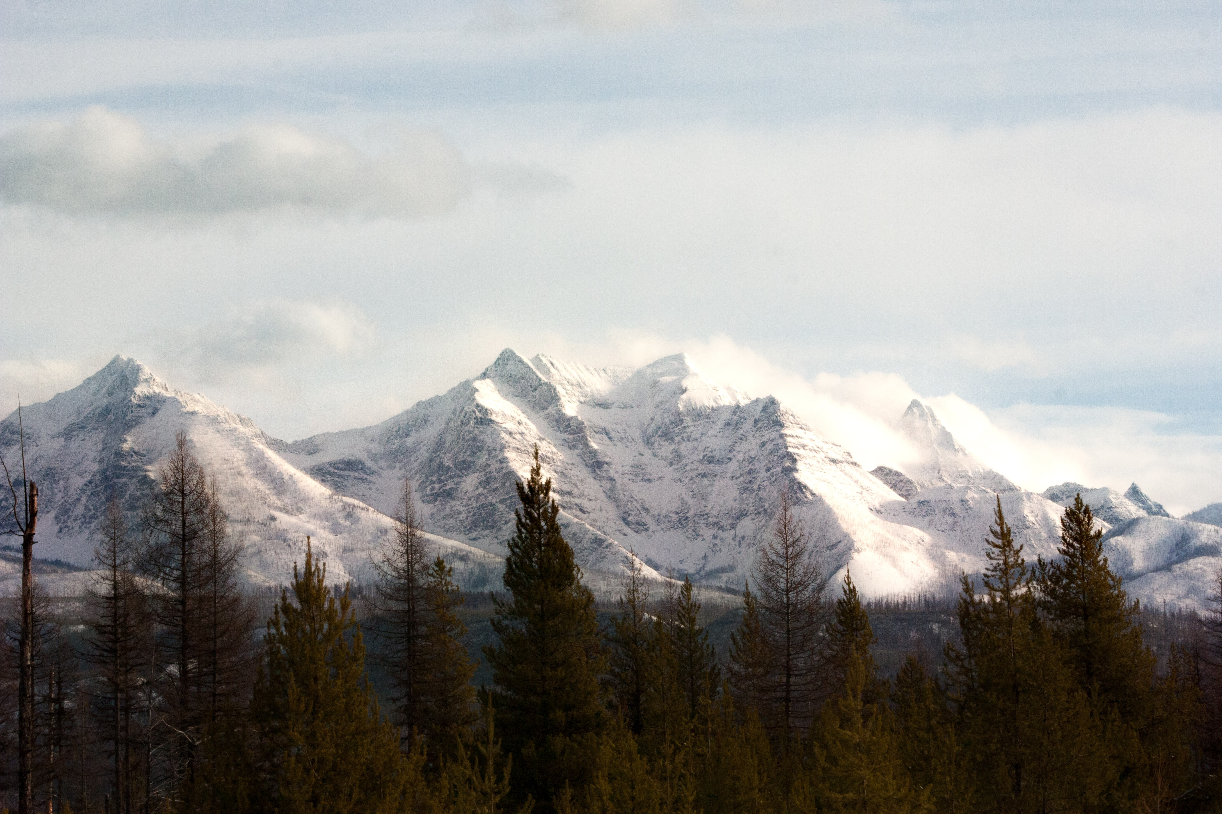 snow capped mountains near pine trees at daytime