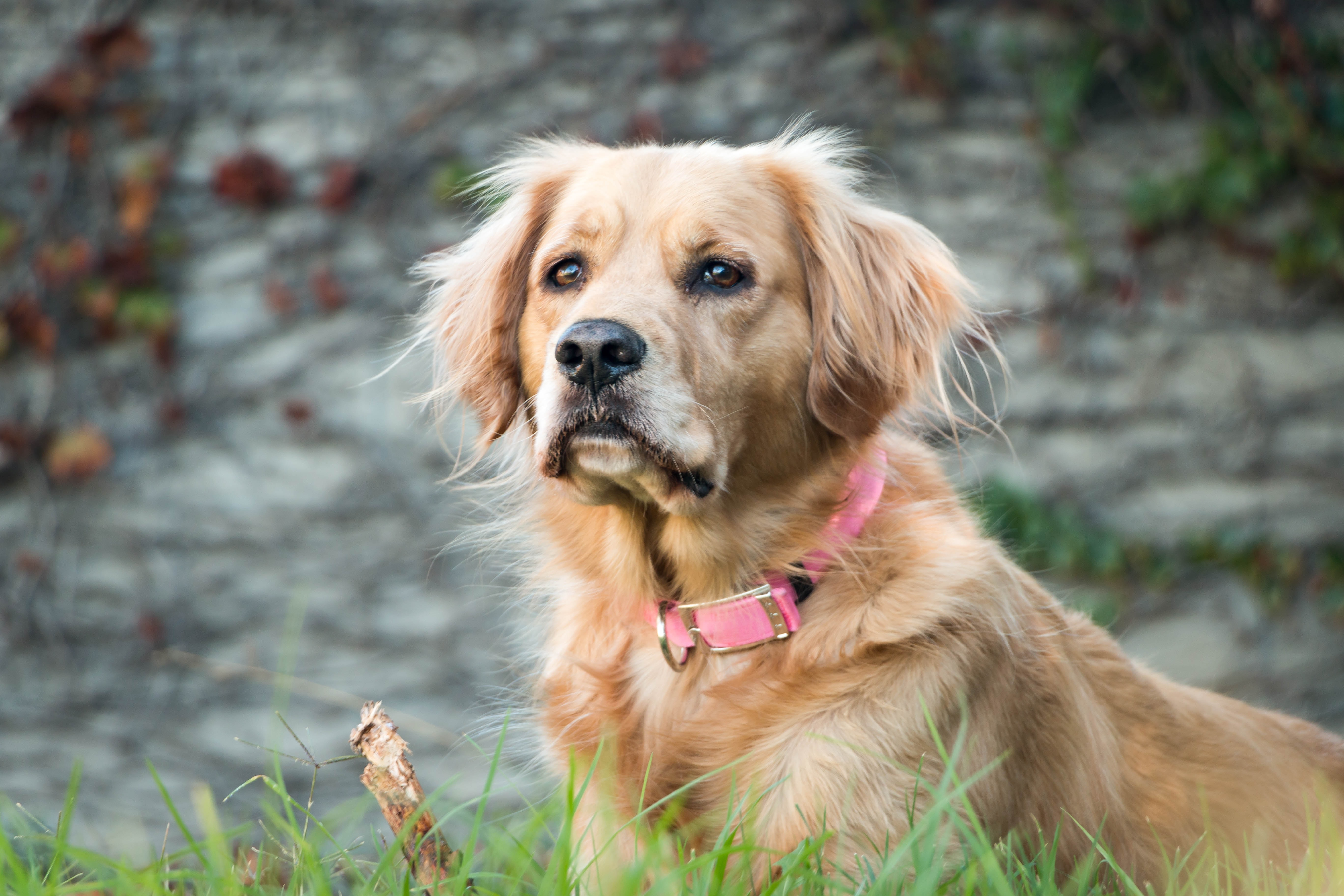 dog sitting on grassy ground