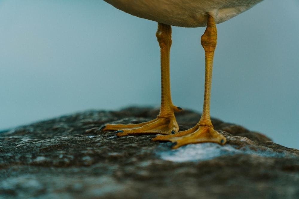 focus photography of pair of bird feet