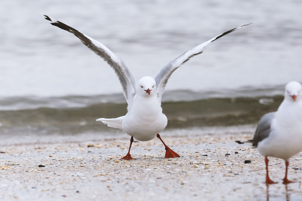 two seagulls in the beach