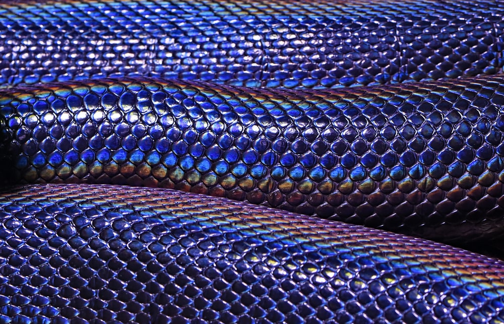 blue and purple snakeskin