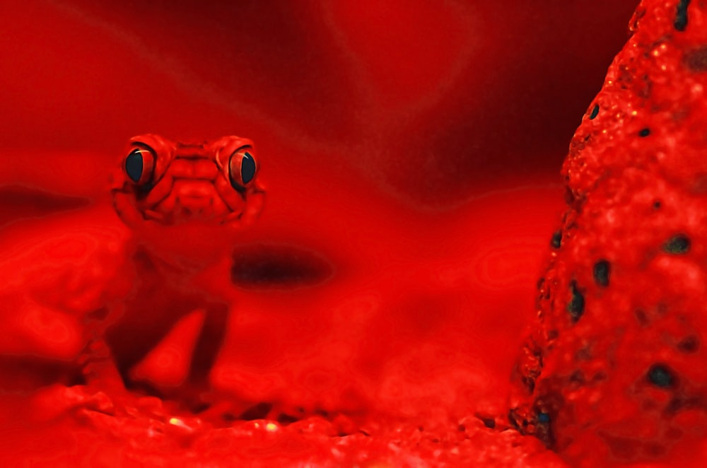 red lizard selective photography