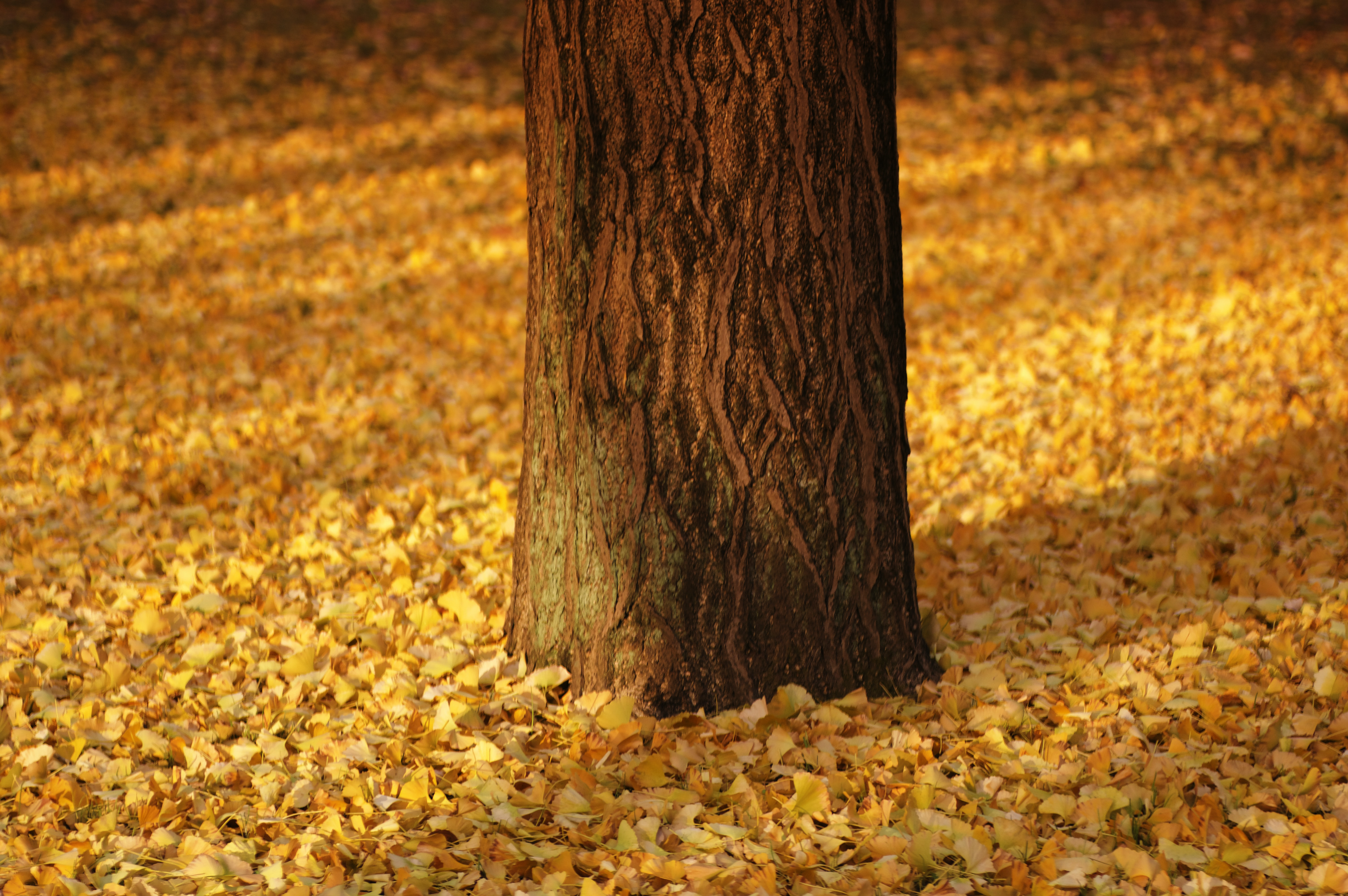 brown tree surrounded by yellow leaves