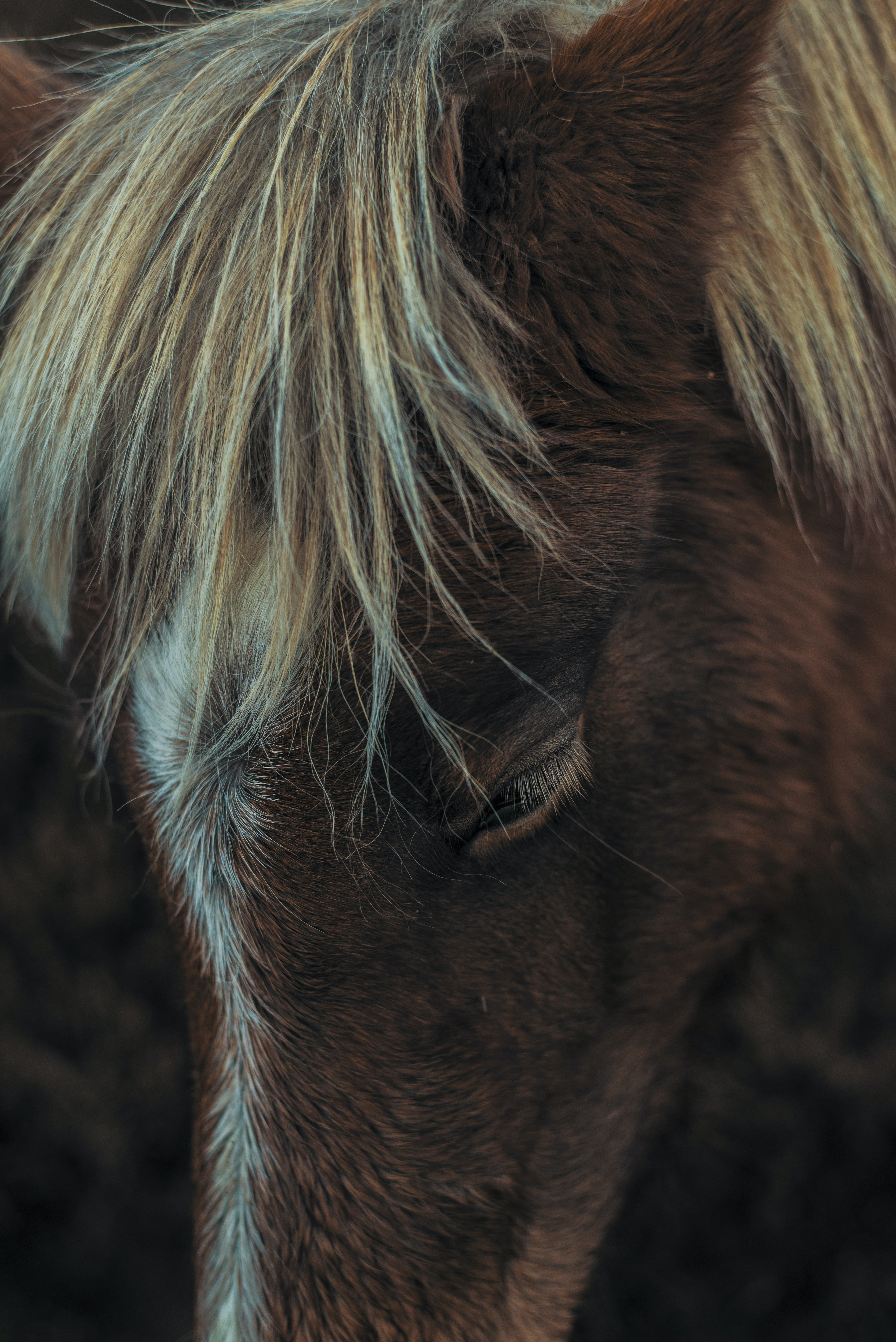 tilt shift photography of a foal