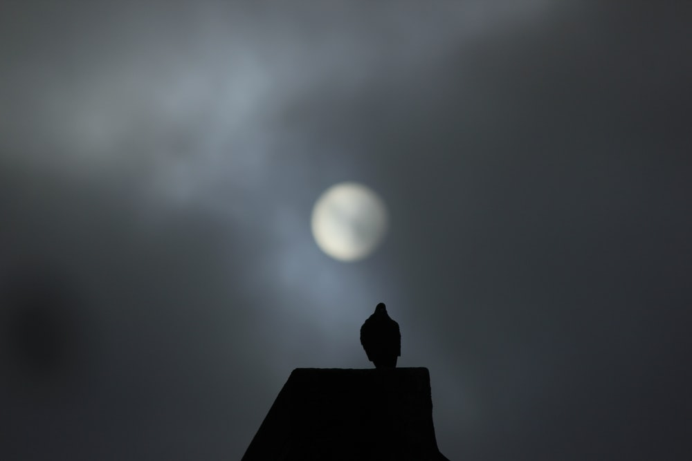 silhouette of bird on roof during night