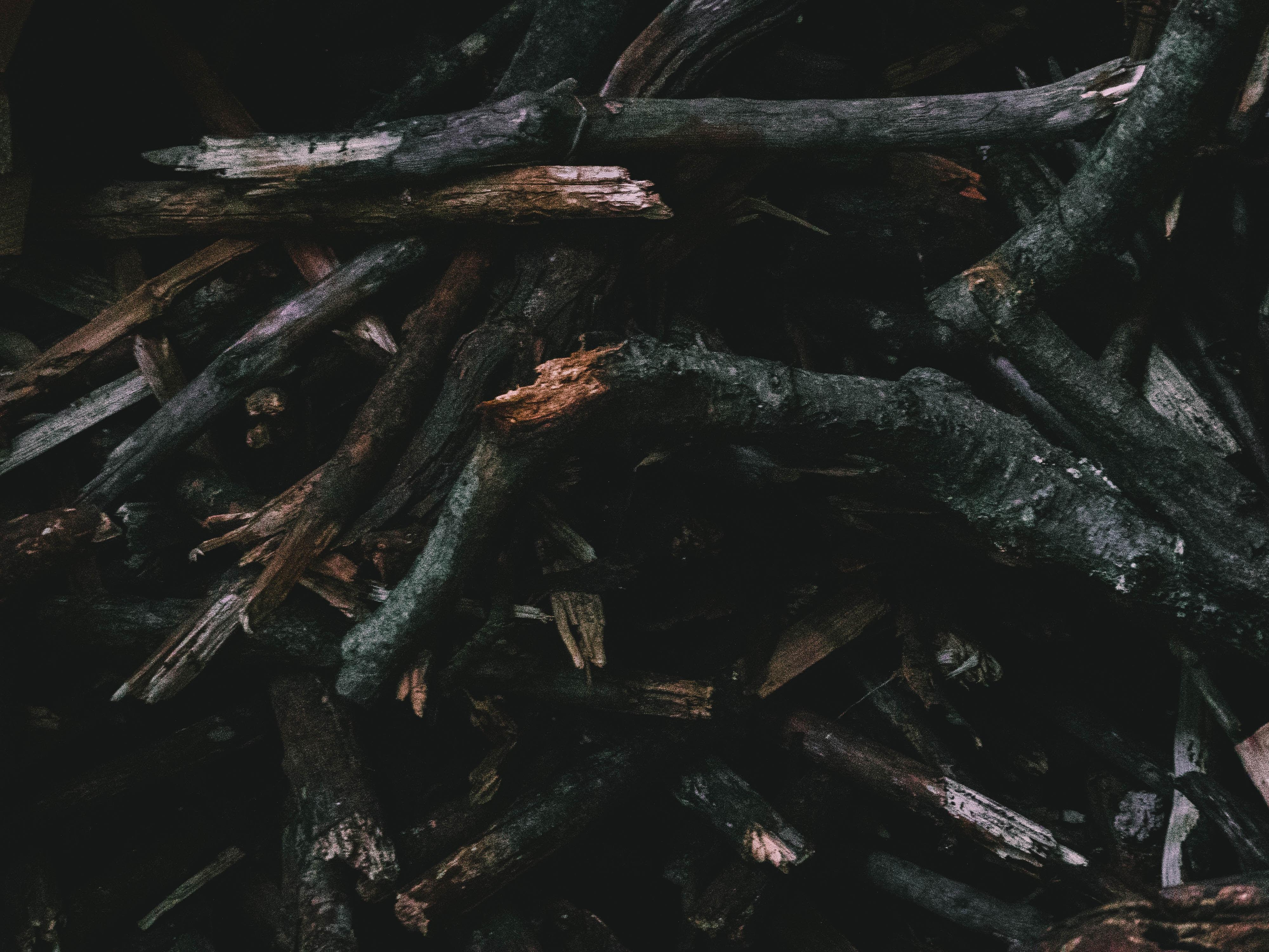 closeup photo dried woods