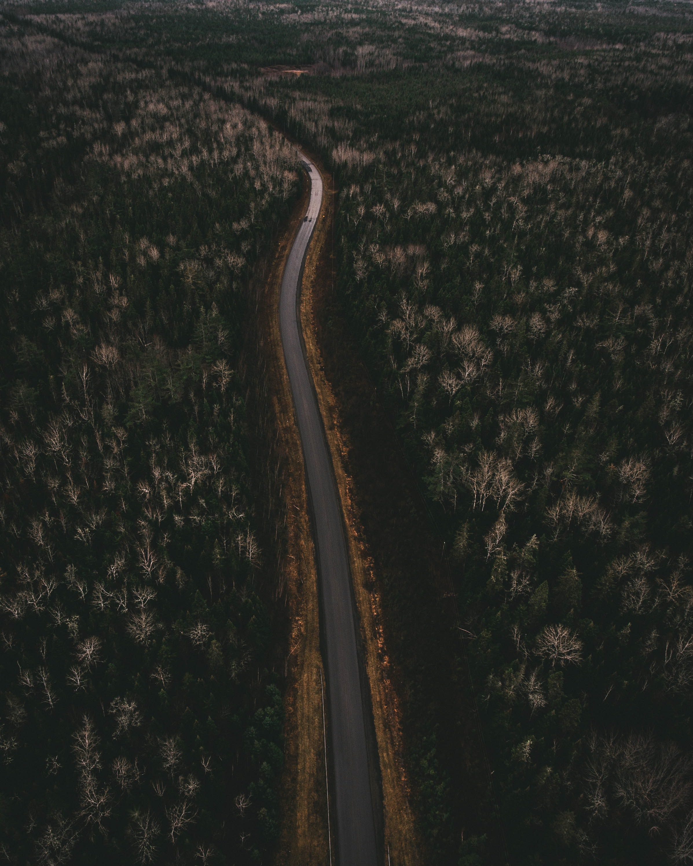 asphalt road between forests
