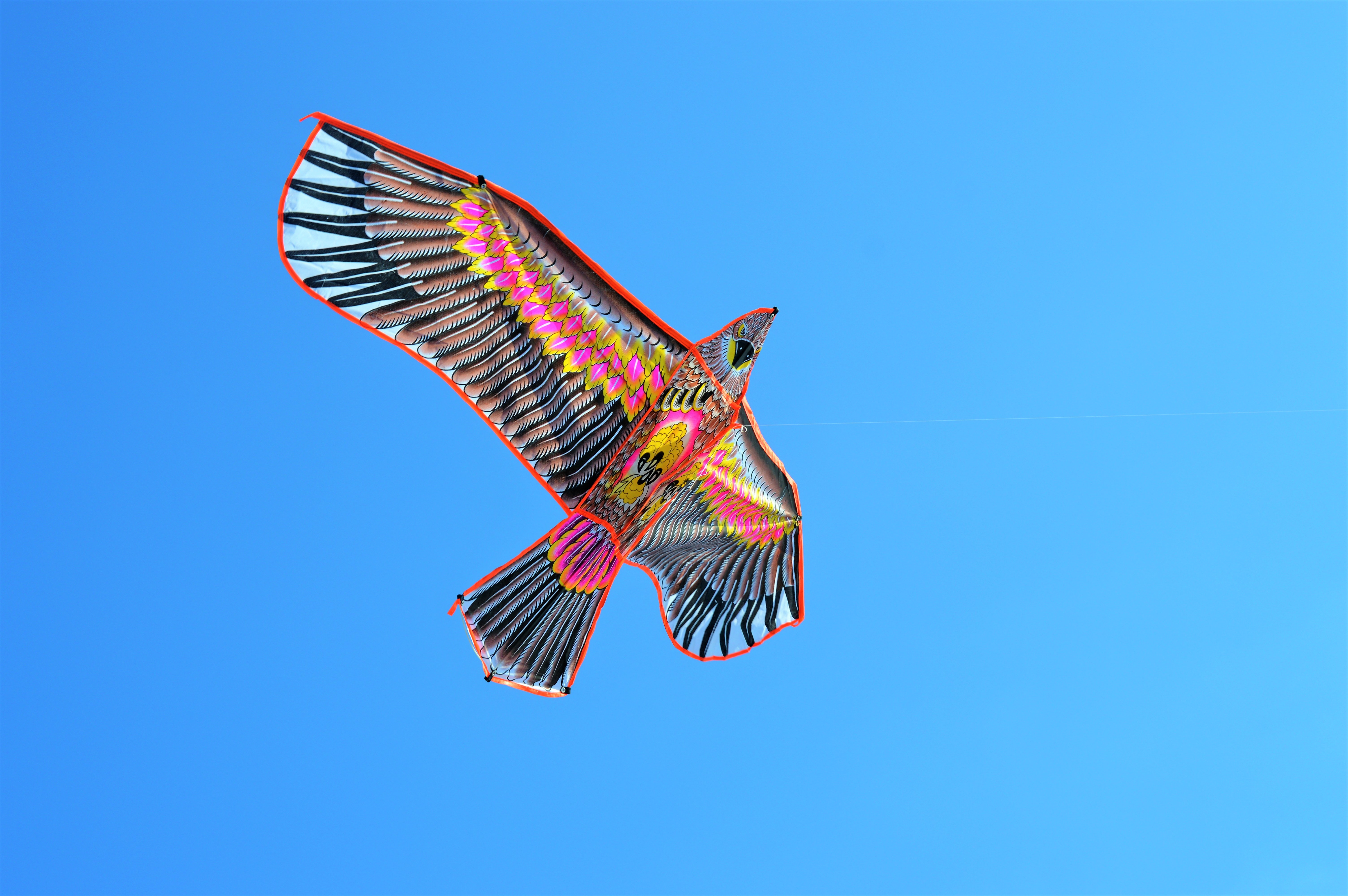 photo of black and pink kite