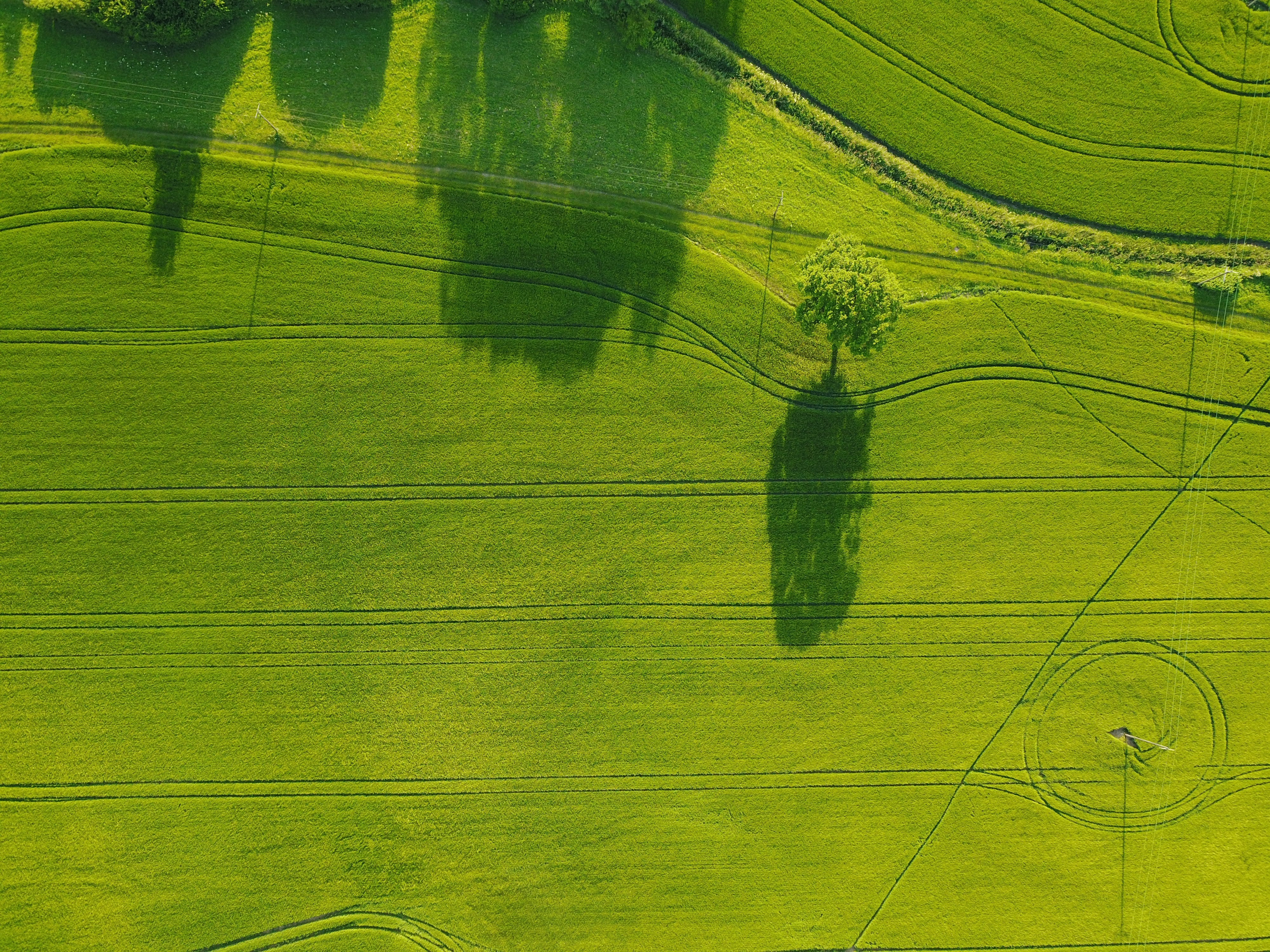 aerial photography of green field